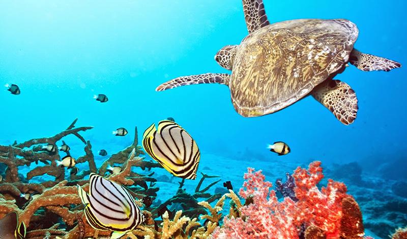 สัตว์มีพิษแสนสวยใต้ท้องทะเล