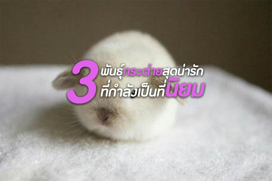 3 พันธุ์กระต่ายสุดน่ารัก ที่กำลังเป็นที่นิยม